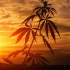 Did You Miss Your Chance to Buy Aurora Cannabis Stock?