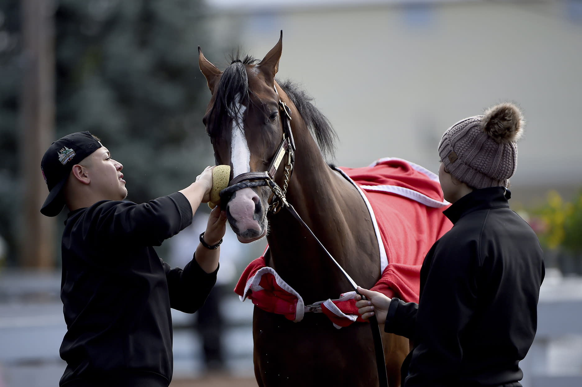 Preakness contender War of Will is washed outside of the barn, Tuesday, May 14, 2019, at Pimlico Race Course in Baltimore. The Preakness Stakes horse race is scheduled to take place Saturday, May 18. (AP Photo/Will Newton)