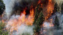 Laporan: Bekerja mengurangi risiko kebakaran hutan miliki manfaat ekonomi