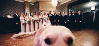 Bride has her dog as flower girl in wedding