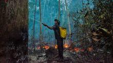 Zahl der Waldbrände im Amazonas-Regenwald in Brasilien erneut stark gestiegen