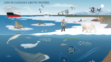 From classrooms to cabins, new Arctic atlas hopes to spark imaginations