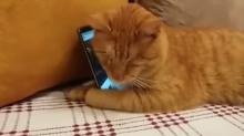 Cego, gato abraça celular ao ouvir seu pianista favorito