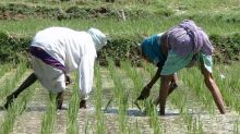 Así debes cocer el arroz para eliminar el arsénico sin perder nutrientes