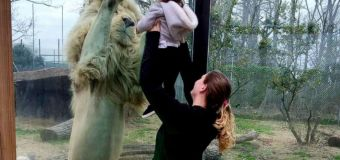 Toddler and lion are new BFFs