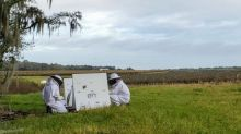 Bee Vectoring Technologies Closes Grower Deals in Three New Markets