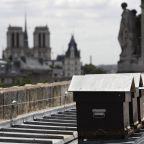Bees survive Notre Dame fire after getting 'drunk on smoke'