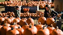 Nature deals a blow to pumpkin sales