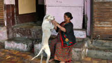 No more 'one home, one dog' policy in Bengaluru: BBMP withdraws controversial pet licensing law following outrage