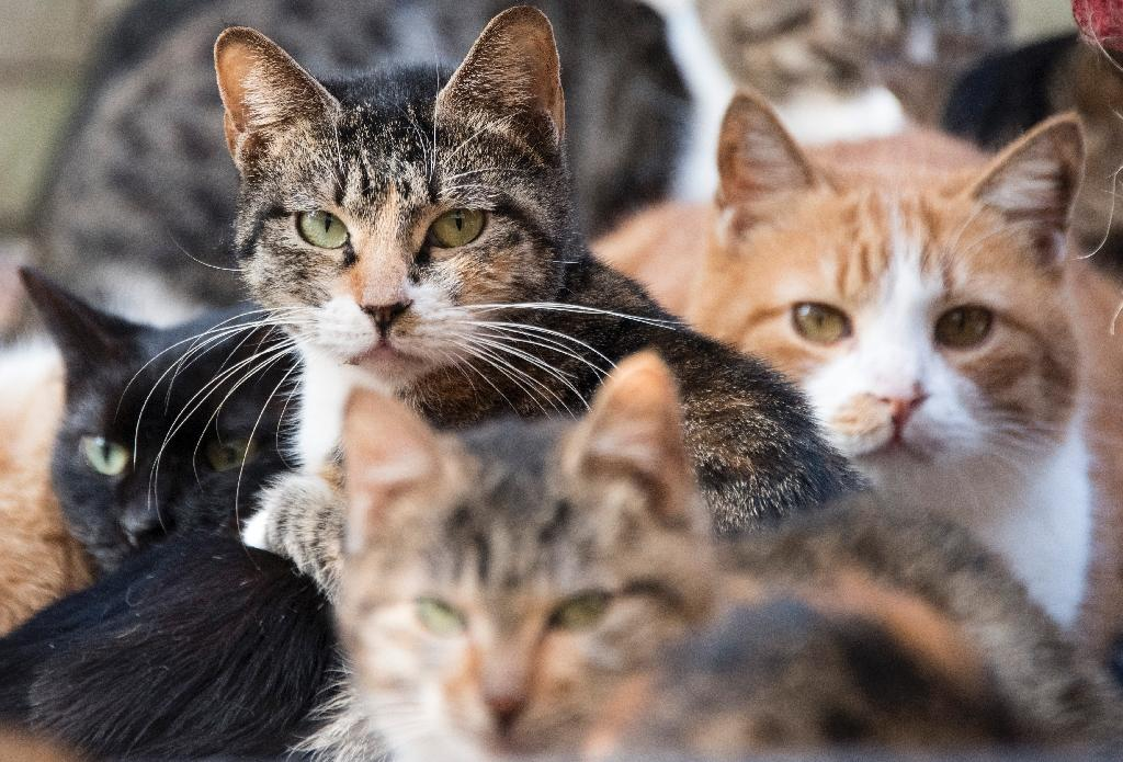 Police turned their attention to the stray cats loitering around Matsumoto's house, and found traces of what may be human blood on one of them, the Nishinippon Shimbun newspaper said Friday