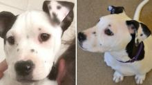 Seeing Double? Puppy Born in Shelter Has Bizarre Image of Herself on Left Ear
