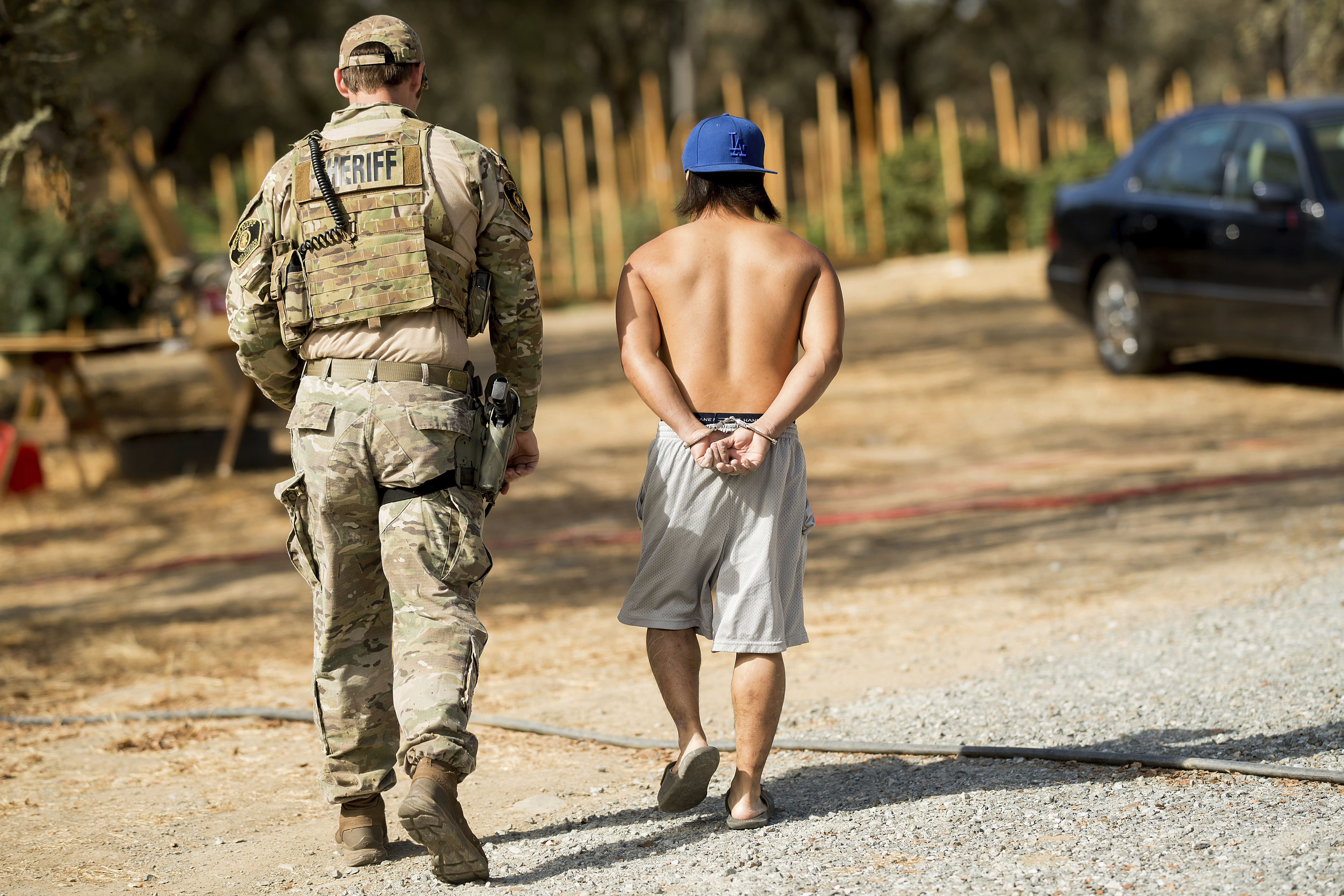 FILE - In this Sept. 29, 2017, file photo, a sheriff's deputy arrests a man for allegedly cultivating marijuana in unincorporated Calaveras County, Calif. Arrest data released by the California Department of Justice show there were 1,181 felony marijuana arrests in California in 2019, down 27% from 2018, of 1,617 arrests and the lowest number since 1954. (AP Photo/Noah Berger, File)