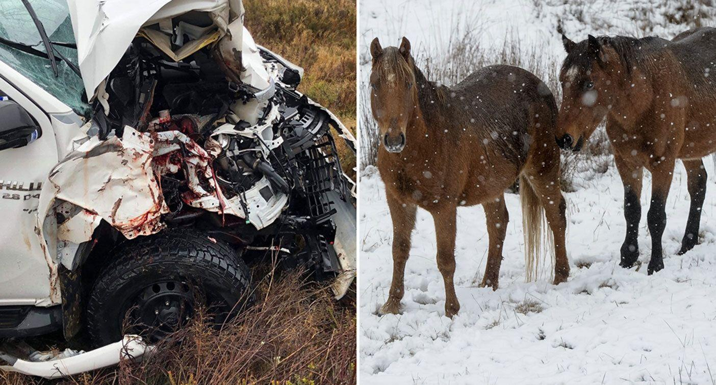 Picture of dead horse amid calls for speed limit reduction on Snowy