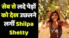 Shilpa Shetty started jumping on apple-laden trees in Manali