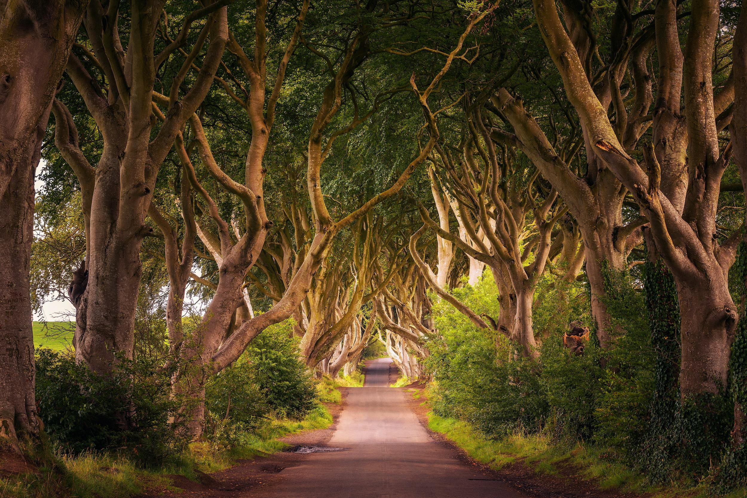 """<p><strong>GOT location</strong>: The road from King's Landing</p>  <p><strong>Real life location:</strong> Dark Hedges, Northern Ireland</p>  <p>Feel like you're riding with Brienne of Tarth and Podrick as youstroll along the Dark Hedges.</p>  <p><a href=""""https://fave.co/2ukOZ1O""""><strong>Book your trip.</strong></a></p>"""