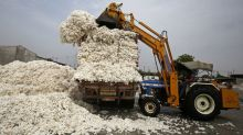 China buys Indian cotton as prices at home jump: industry officials