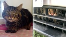 Cat travels 120 kilometres wedged in the air vent of family car