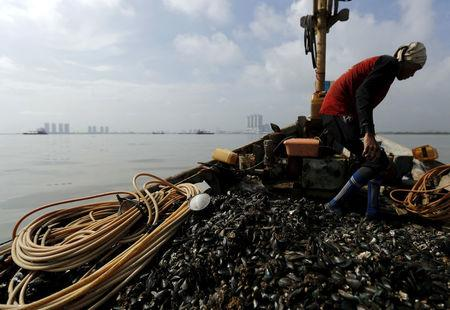 Kasno walks on his boat as he collects green mussels in Jakarta Bay, Indonesia, April 20, 2016. REUTERS/Beawiharta/File Photo