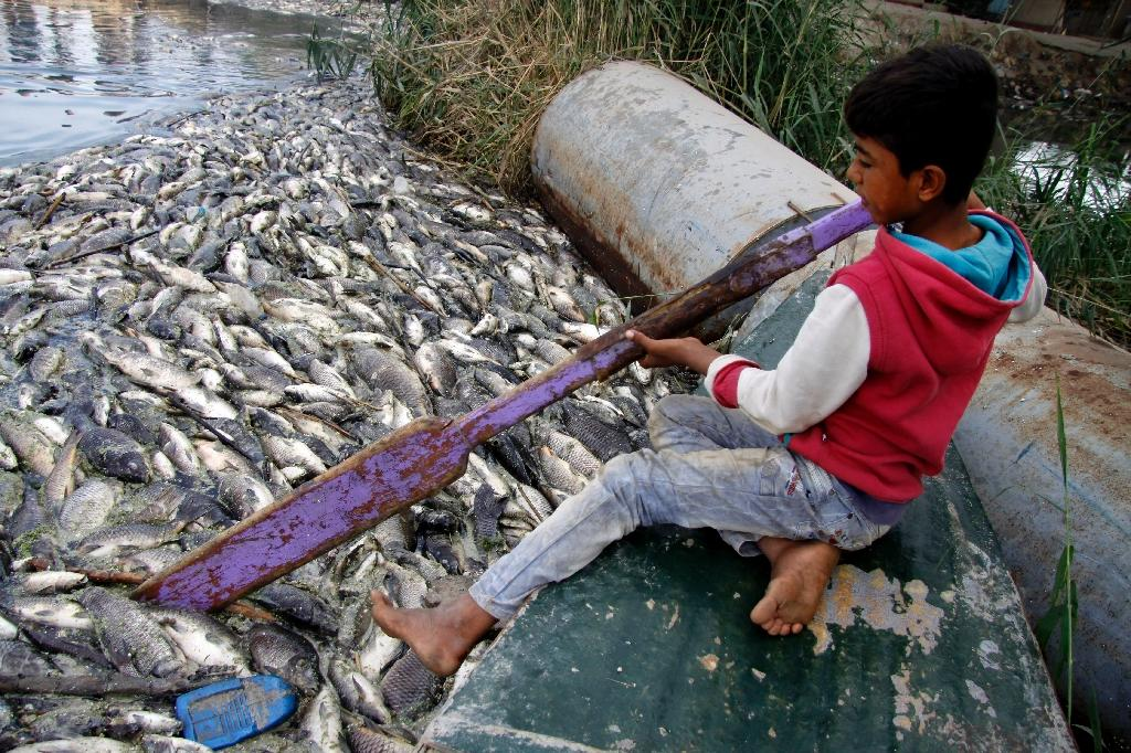 An Iraqi boy clears dead fish floating on the Euphrates River near the town of Saddat al-Hindiyah, on November 2, 2018 (AFP Photo/Haidar HAMDANI)