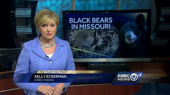 Black bear spotted in west-central Missouri
