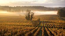 """""""Il va y avoir des burn-out chez les vignerons"""" : l'année tourne au vinaigre pour le secteur viticole"""