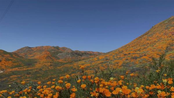 Bruce Munro's Field of Light Installation in California Is