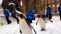 Penguins Go To Dubai