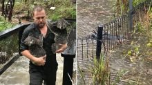 Animals threaten to break enclosures as Australian Reptile Park is flooded with rain