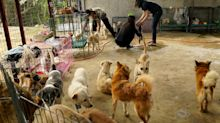 Philippines farm shelters pets rescued from volcano