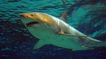 Nouvelle-Calédonie : un homme tué par un requin au large de Nouméa