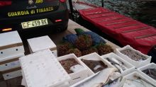 Sequestrati 3 q pesce di origine sconosciuta vicino a Venezia