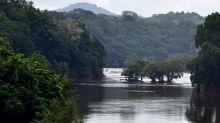 Gabon: des enchères pour le bois précieux par qui le scandale est arrivé