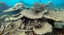 Great Barrier Reef Experiences Its Worst Coral Die-Off