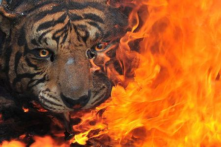A critically endangered Sumatran tiger was brutally killed in Indonesia on Sunday, the latest victim of a killing spree targeting near-extinct species that has alarmed conservationists.  Police on Borneo island arrested at least two people in two separate incidents this year in which an orangutan had