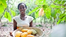 General Mills Signs on to World Cocoa Foundation's Joint Frameworks for Action to Combat Deforestation