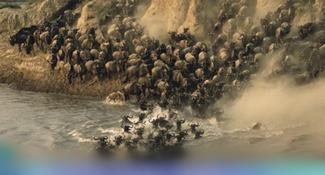 世界奇景!非洲上萬隻牛羚驚險過河