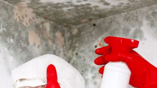 Our Goal is to Make Sure Mold Never Returns
