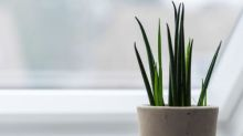 Open your windows – and four other ways to improve the air quality at home
