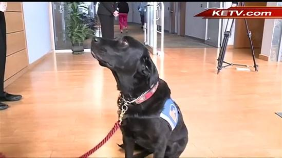 Nebraska to get its first courthouse dog