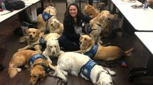 Meet the very good dogs who flew to Las Vegas to comfort mass shooting survivors
