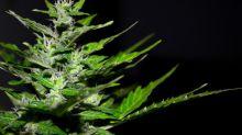 Marijuana Support: Senator Cory Booker Announces Presidential Bid