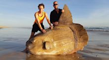 'I thought it was fake': Giant fish found on South Australian beach