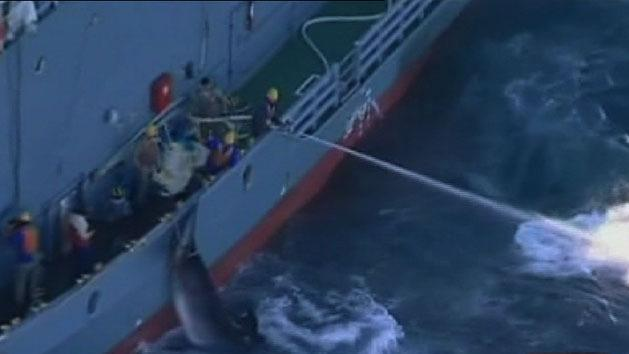 Government moves to halt whaling
