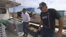 P.E.I. company testing new bait for lobster and crab fishery