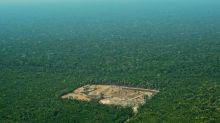 Los ecologistas temen que una victoria de Bolsonaro sacrifique la Amazonia