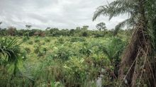 Plan to drain Congo peat bog for oil could release vast amount of carbon
