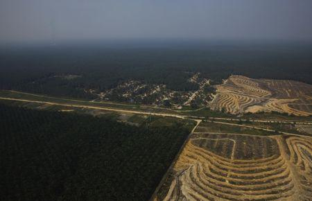 An aerial view of a palm oil plantation is seen during the haze in Indonesia's Riau province