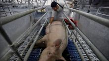 Exclusive: Mexico set to impose 20 percent tariff on U.S. pork legs - sources