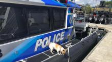 Good News des Tages: Wie ein Hund ein Pärchen von brennender Yacht rettete