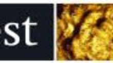 Gowest Gold Announces Debt Conversion